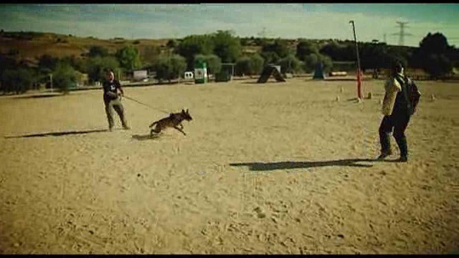 El guía canino. Nuevos métodos.