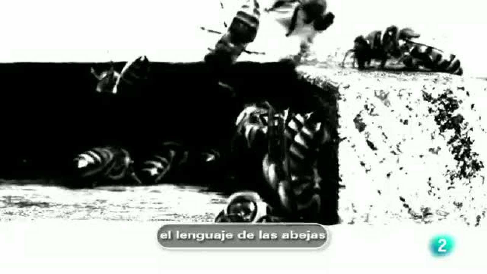 tres14 - Curiosidades científicas - El lenguaje de las abejas