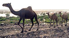 Avance Buscamundos - Etiopía, el túnel del tiempo