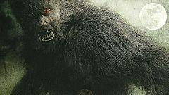 Lobos de Arga: Los especialistas