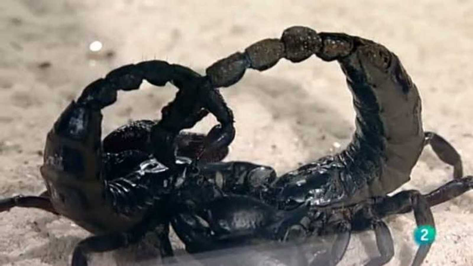 Para todos La 2 - Mitos de la ciencia - Peces y escorpiones