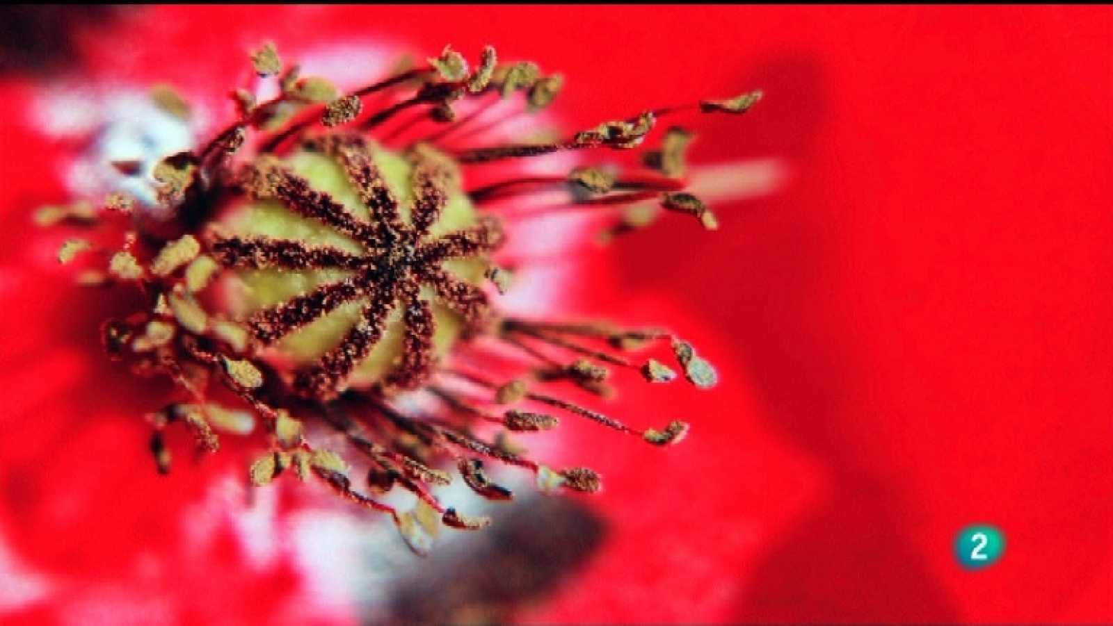 Jara y sedal - Luz y naturaleza - Ver ahora