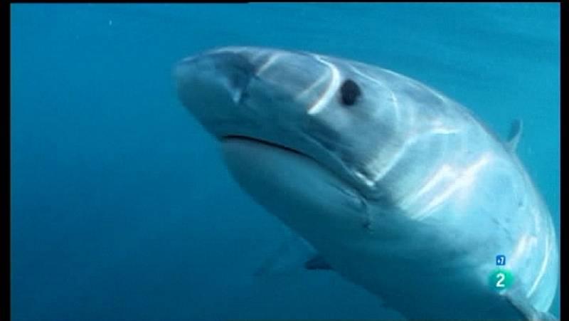 Grandes documentales - Los depredadores de los mares (comienzo)