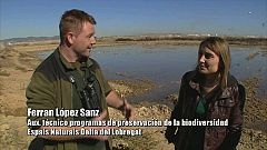 El escarabajo verde -  El Delta del Llobregat