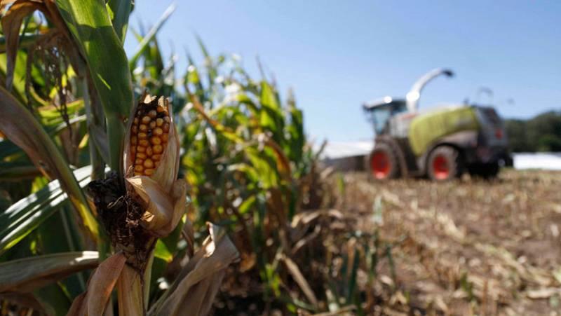 Sequías e inundaciones amenazan con crear otra crisis alimentaria mundial