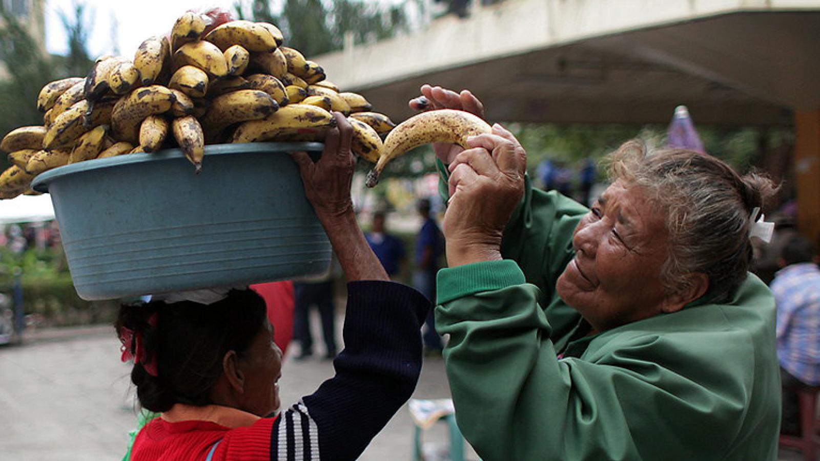 En Honduras, los campesinos se unen para reclamar una reforma agraria que proteja sus derechos frente al acoso de los terratenientes. Los grandes propietarios desplazan a los agricultores para plantar en sus tierras cultivos para biocombustibles.
