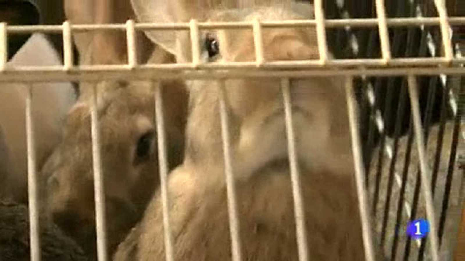Comando Actualidad Tirando Los Precios Crisis En Las Granjas De Conejos Rtve Es
