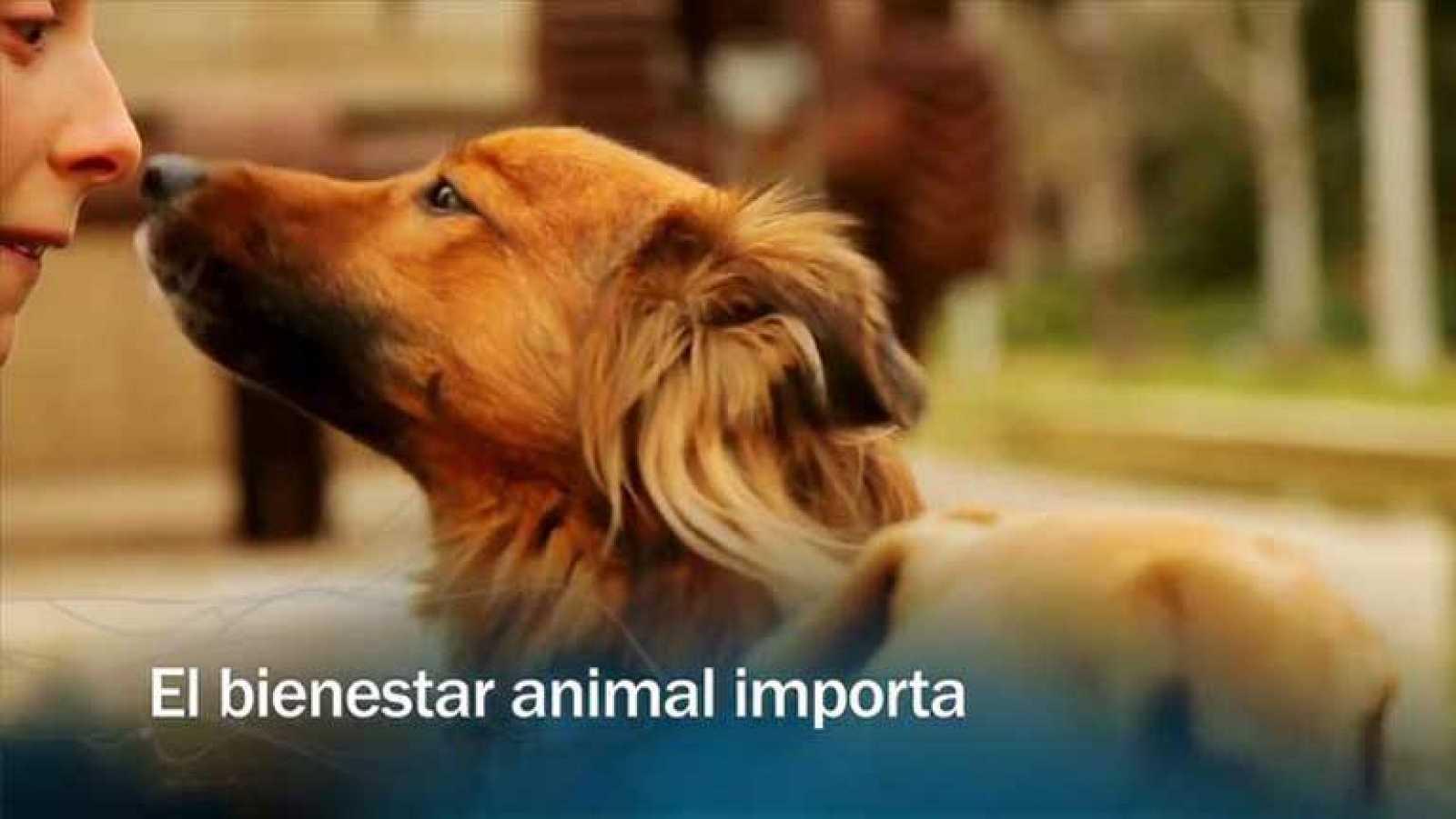 Redes - El bienestar animal importa - Avance