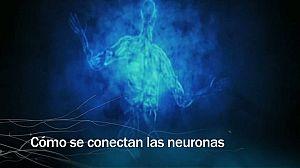 Redes - Cómo se conectan las neuronas - avance