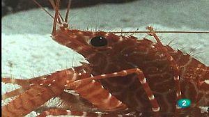 Los crustáceos