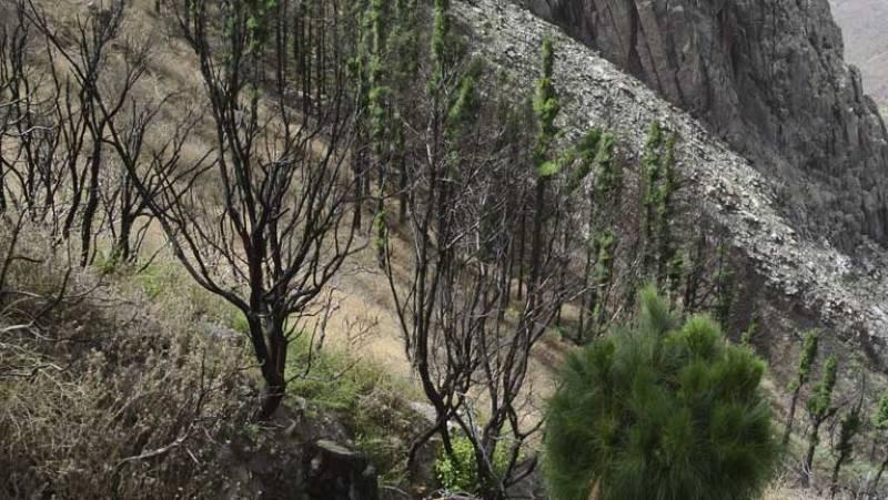 Un año del incendio de La Gomera