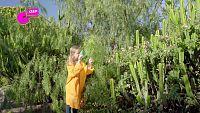 CAMPAÑA 'ECOSISTEMAS TERESTRES' - ¡Observar las plantas mola!
