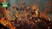CAMPAÑA 'MEDIO AMBIENTE' - Cuidar los bosques y prevenir incendios