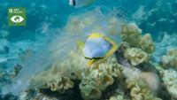CAMPAÑA 'MEDIO AMBIENTE' - Evita la contaminacion de mares y océanos