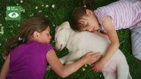 CAMPAÑA 'MEDIO AMBIENTE' - Respeta y progete a los animales