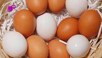 CAMPAÑA 'SALUD Y BIENESTAR' - ¿Sabes por qué algunos huevos son blancos y otros morenos?