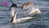 CAMPAÑA 'VIDA SUBMARINA' - Si el océano está limpio, saltamos de alegría