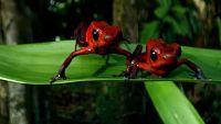 CIENCIAS NATURALES - Los anfibios