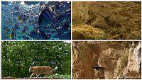 CIENCIAS NATURALES - Los animales se desplazan