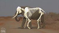 CIENCIAS NATURALES - Los animales vertebrados