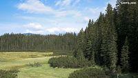 CIENCIAS NATURALES - Los árboles y las estaciones del año
