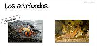 CIENCIAS NATURALES - Así son los artrópodos