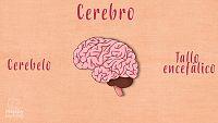 CIENCIAS NATURALES - El cerebro