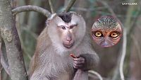 CIENCIAS NATURALES - La función de relación de los animales