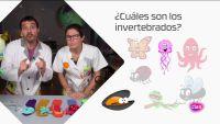 CIENCIAS NATURALES - Invertebrados