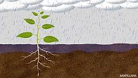 CIENCIAS NATURALES - La nutrición de las plantas