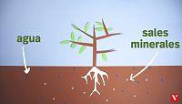 CIENCIAS NATURALES - La nutricio¿n de las plantas