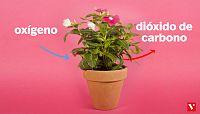 CIENCIAS NATURALES - La respiracio¿n de las plantas