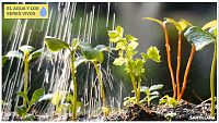 CIENCIAS NATURALES - Los seres vivos necesitamos agua