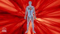 CIENCIAS NATURALES - El sistema circulatorio