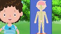 CIENCIAS NATURALES - Sistema Nervioso