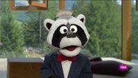 'Está mapachando' - Animales de anuncio y más