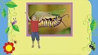IDIOMAS - Caterpillars and Butterflies