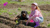 Jimena, la mejor plantando en el huerto
