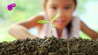 ¿Sabes por qué hay que enterrar las semillas para que crezcan?