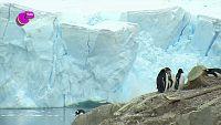 ¿Sabes por qué se derrite el hielo en los Polos?