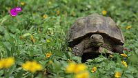 ¿Sabes por qué las tortugas son tan lentas?