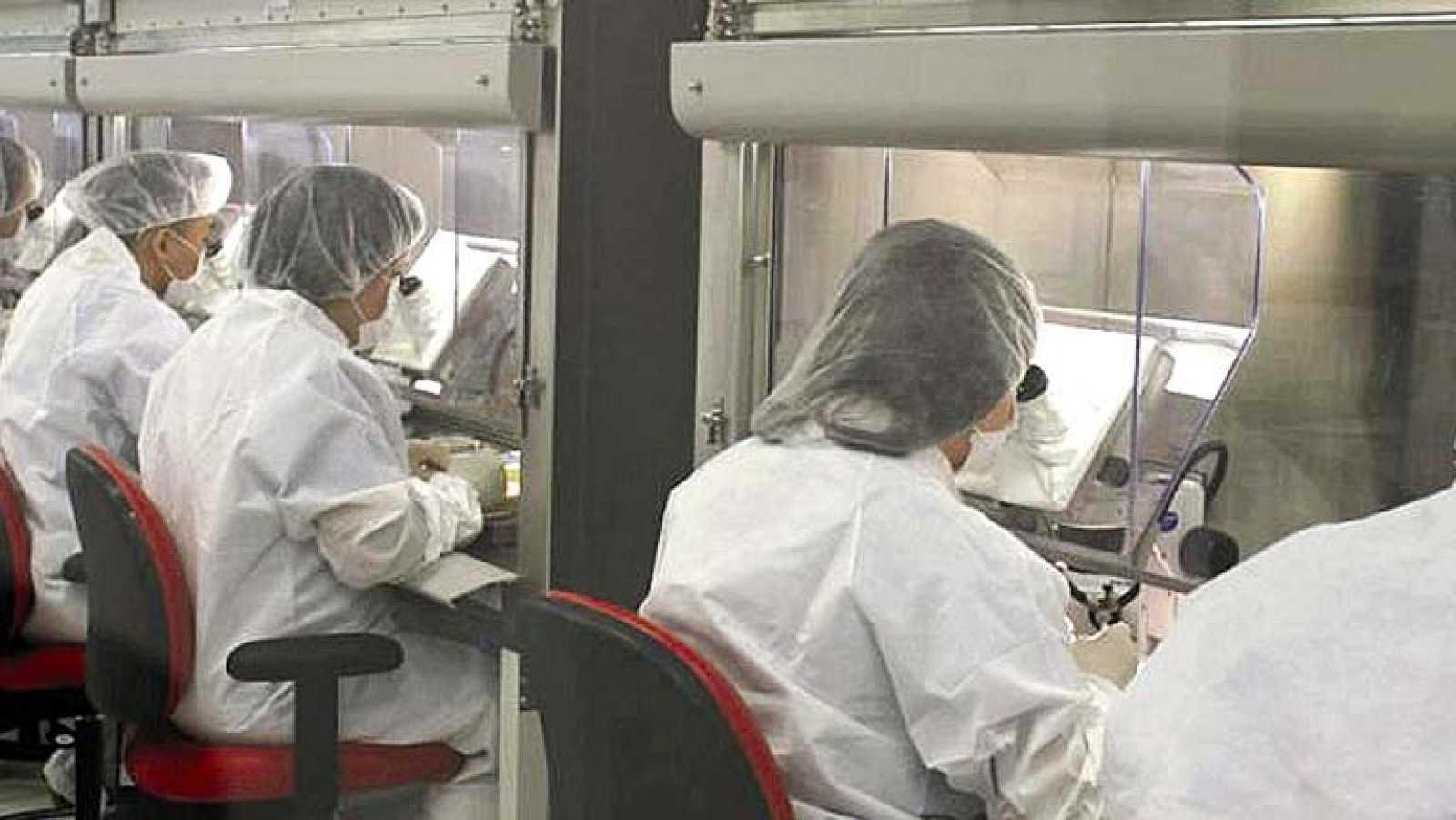 Científicos de Barcelona descubren una proteína clave en la transmisión de la malaria
