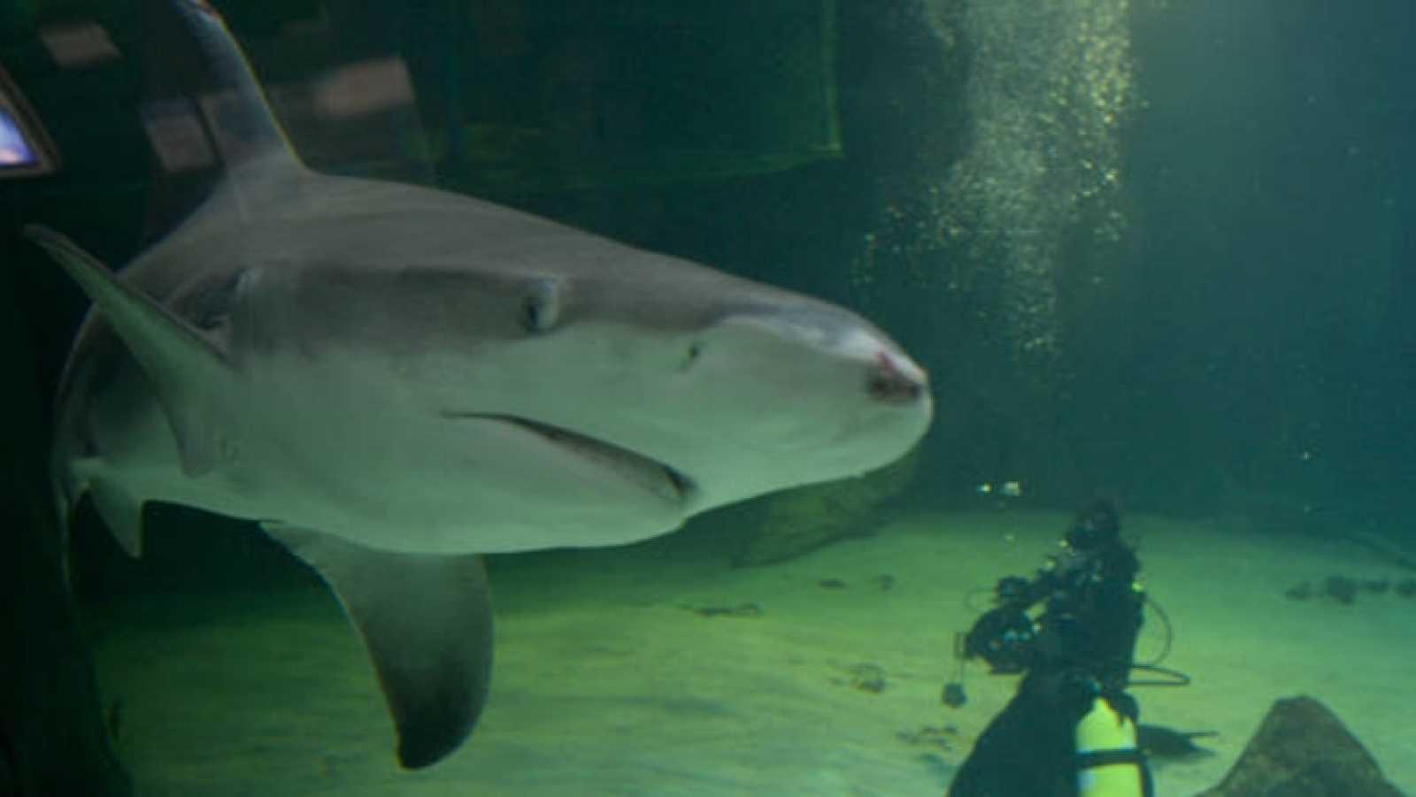 Eurovisión 2014 - Teaser de 'Ruth Lorenzo, entre tiburones'