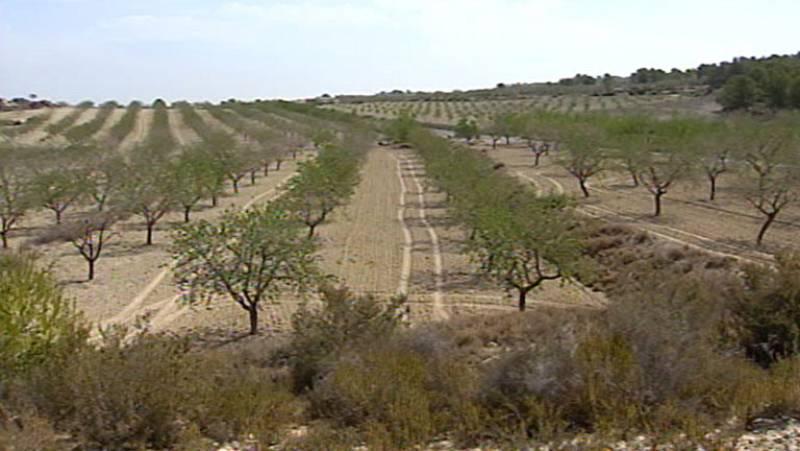 Peligran las cosechas en Alicante con zonas sin lluvia durante casi un año