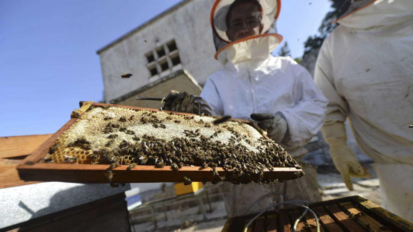 Con el calor aumenta también el riesgo de sufrir picaduras de insectos