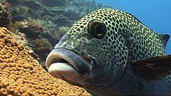 Paraísos submarinos: 'Palau, el país más pequeño del mundo'