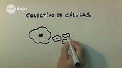 Tres14 - Colectivo de células
