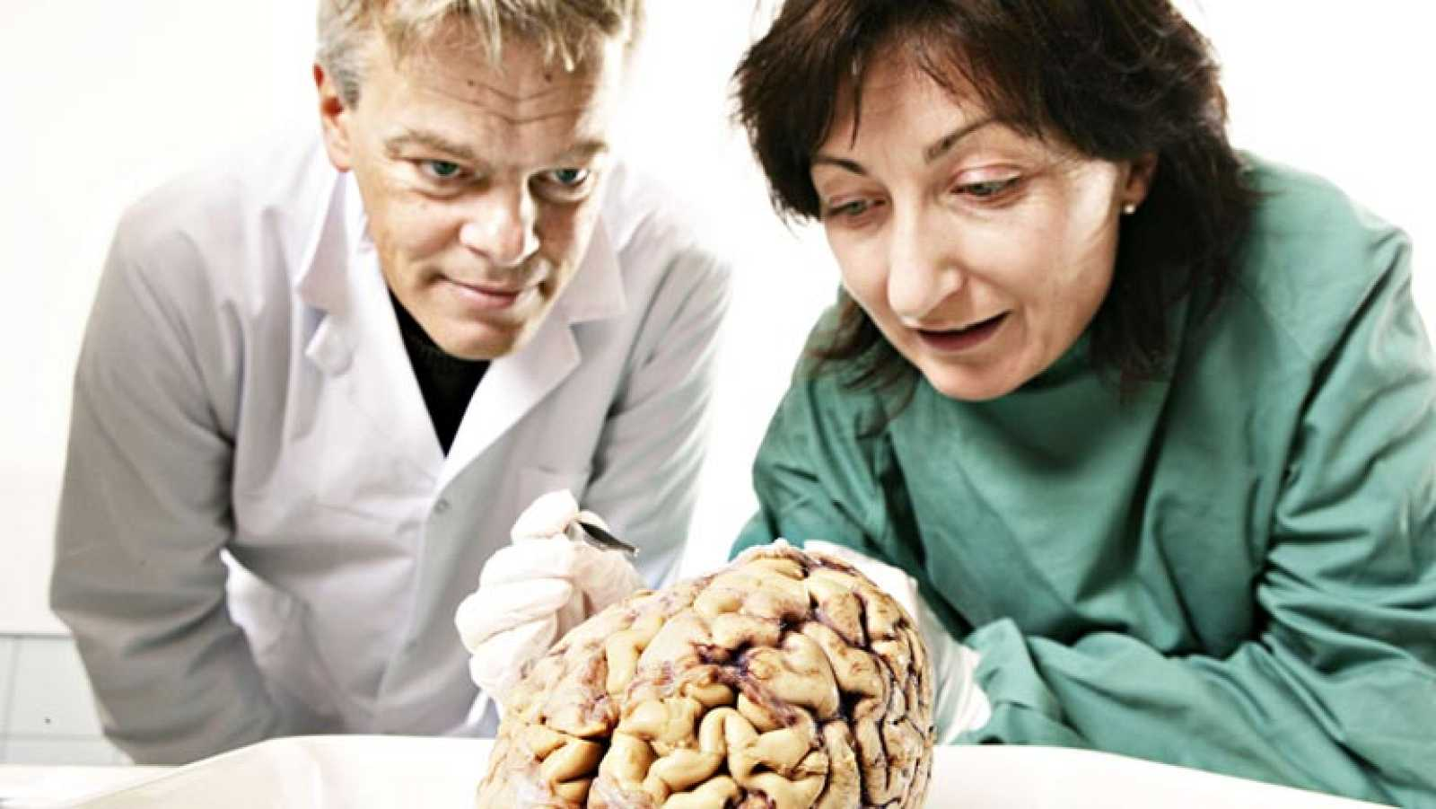 Nobel de medicina  para los descubridores del GPS interno