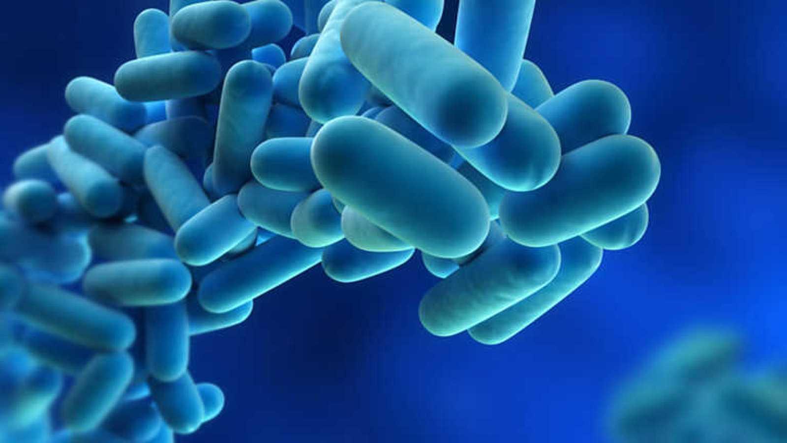 Informe Semanal - Legionela, la bacteria que vuela - Ver ahora
