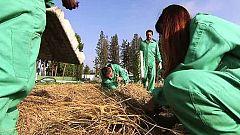 El Escarabajo Verde - Devorando suelo - Avance